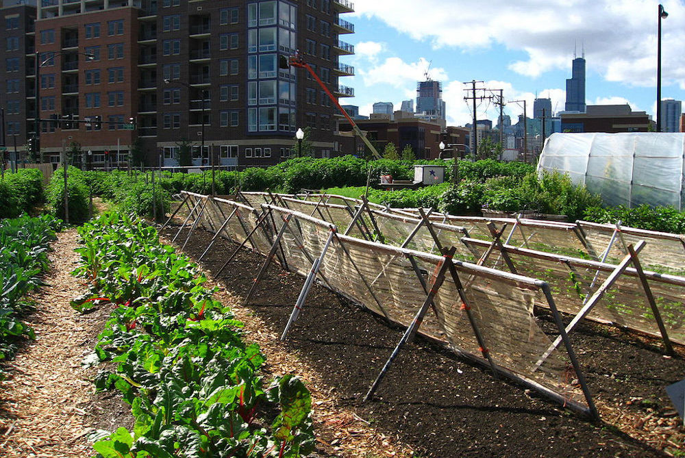 Urban Farms Continue To Be On The Rise