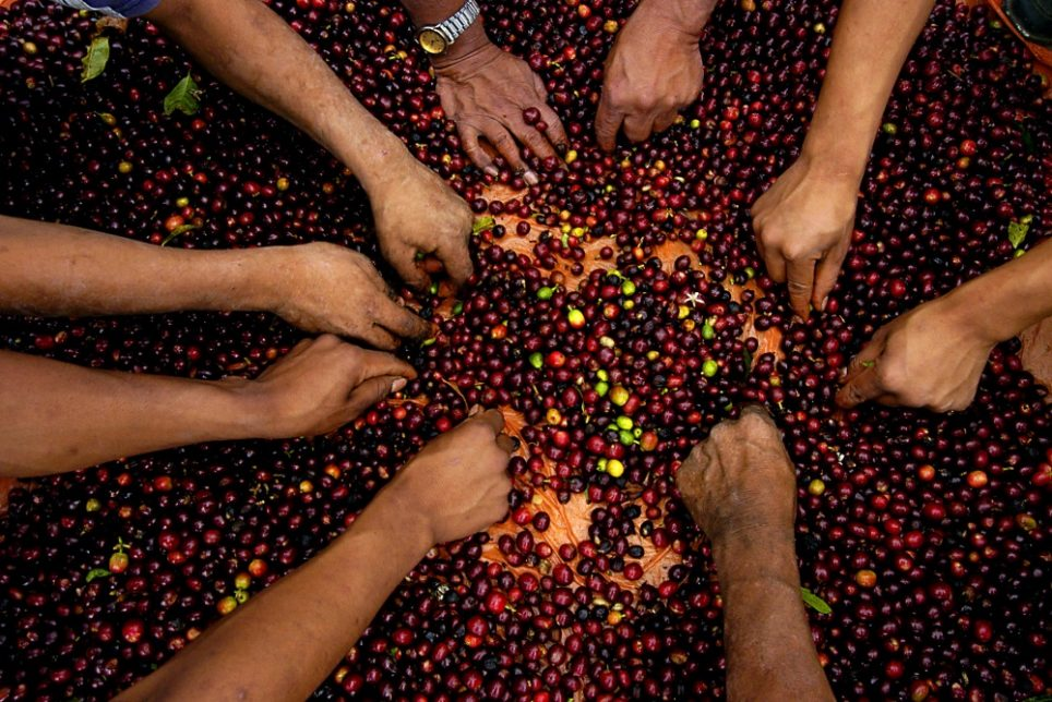 Even Coffee Farmers Are Moving Their Businesses Onto The Blockchain