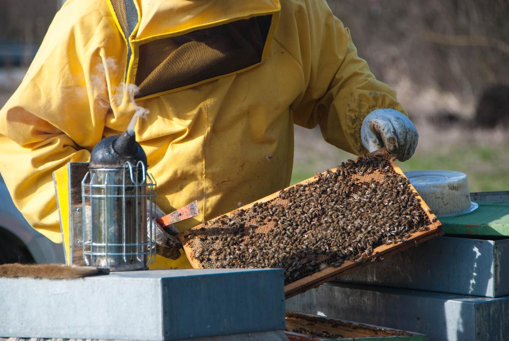 Wi-Fi Beehive Monitoring Keeps Beekeepers Informed