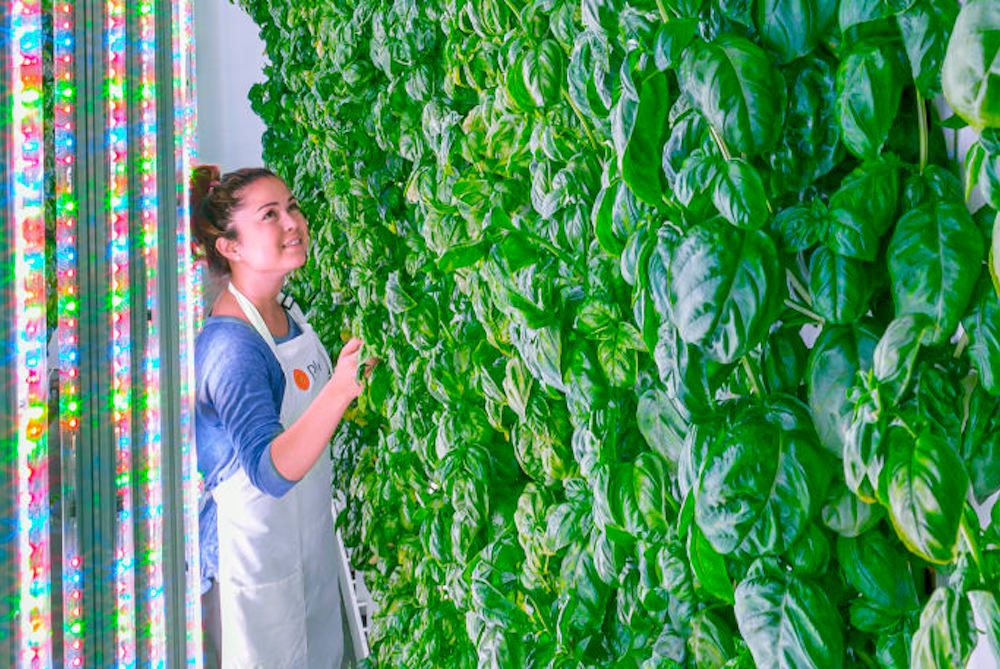 Sustainable Indoor Farm Aims To Grow The Most Delicious Produce