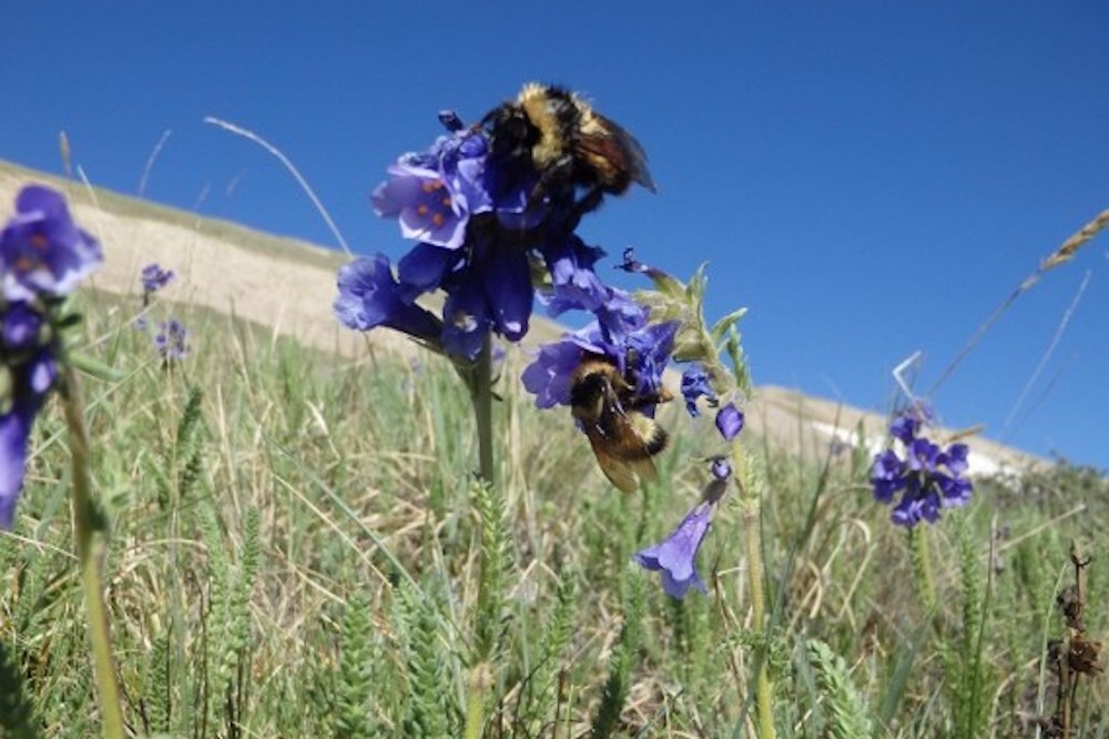 Scientists Track Bee Activity With Microphones