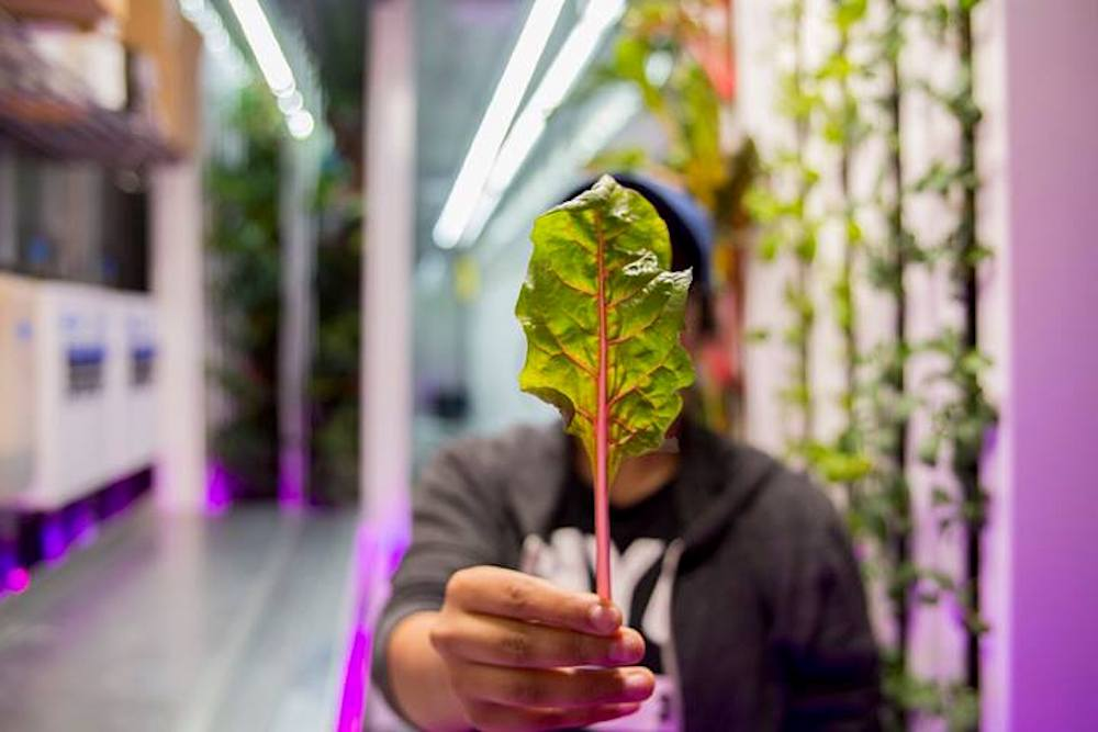 Watch, Listen, Read, See: Where Tech Meets Nature