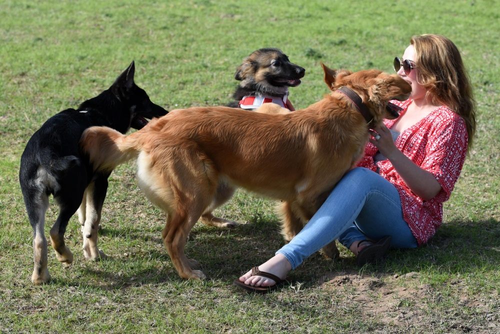 Crowdsourced Platform Connects Pet Owners With Pet Sitters