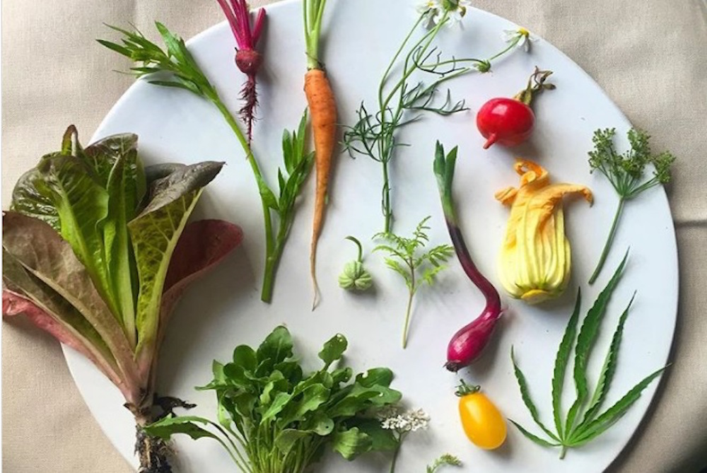 This Platform Will Show People How To Forage For Their Own Food