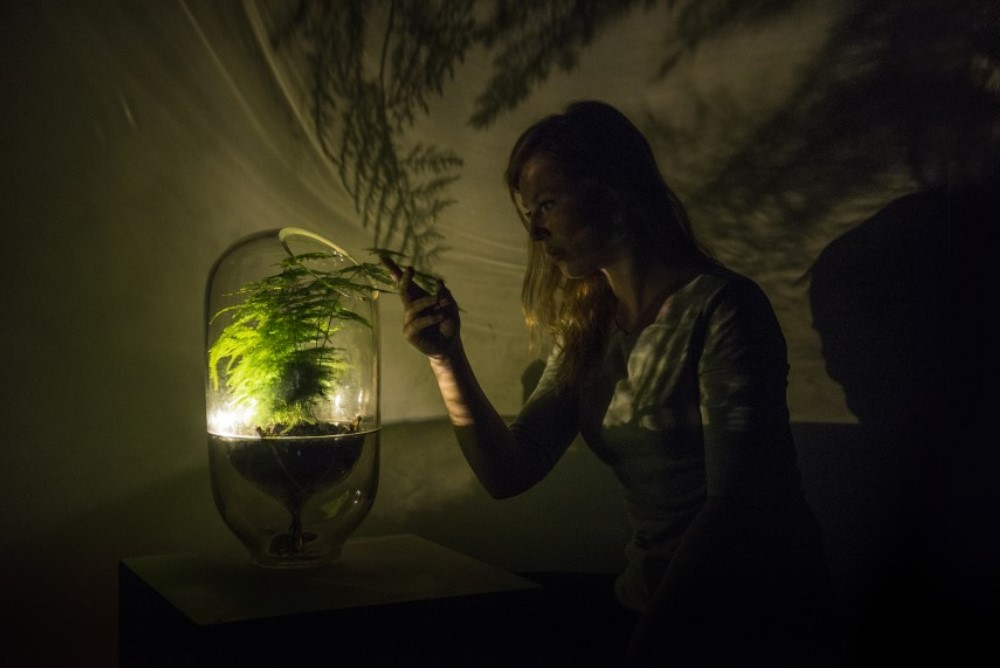 Lamp Harvests Energy From Plants