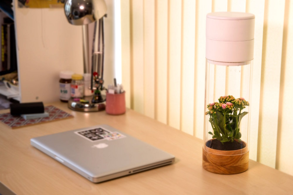 Device Rewards Daily Exercise By Keeping A Plant Alive