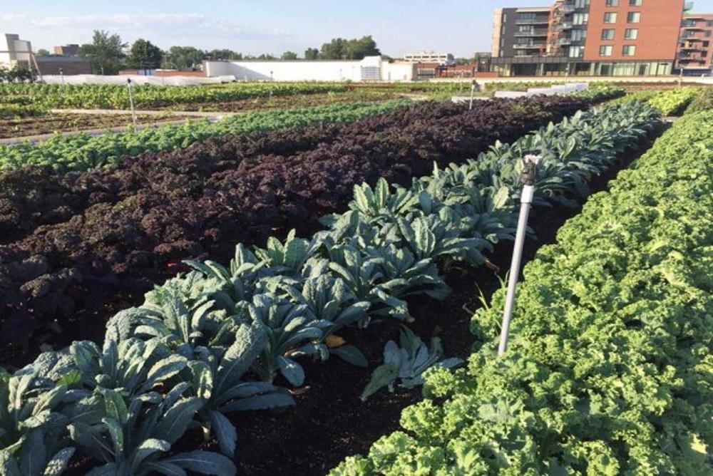 Montreal Supermarket Opens Up A Huge Rooftop Garden
