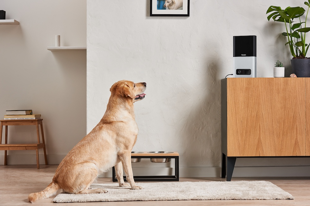 This Device Will Keep Your Pets Company (And Dispense Treats) At Home