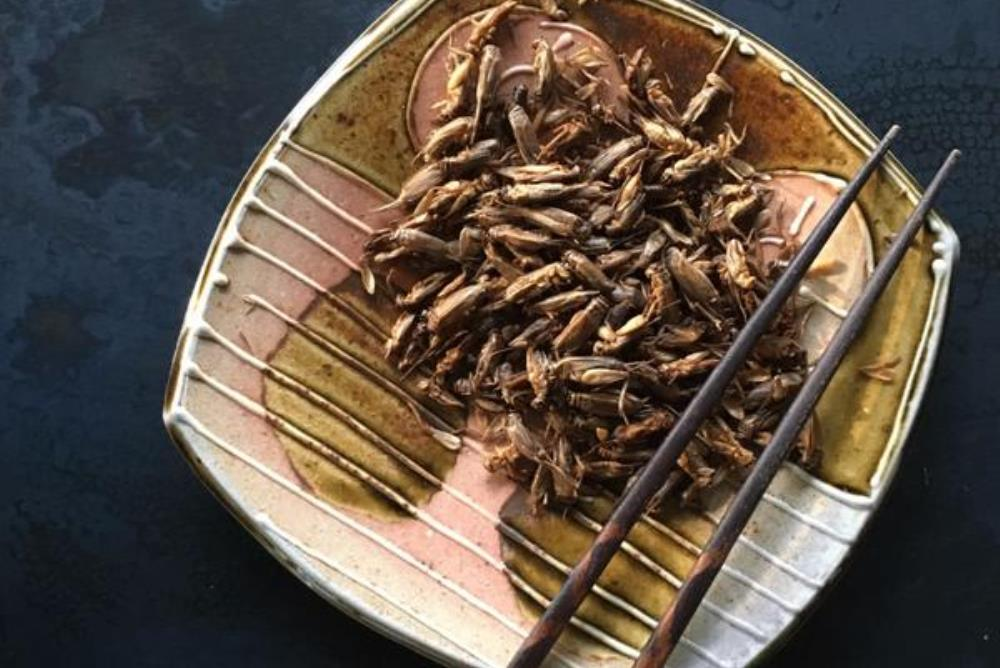Cricket Farm Operated By Robots Aims To Make Insects A Viable Source Of Protein