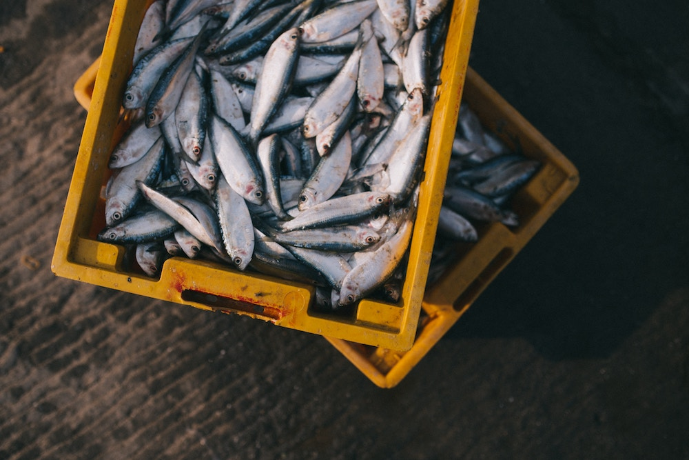 The Future Of Sustainable Seafood Could Be Growing In A Lab