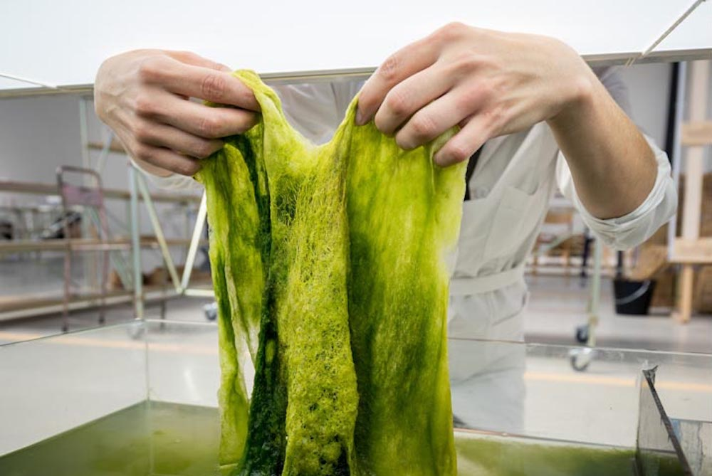 These Designers Want To Spark A New Maker's Revolution With Algae Plastic