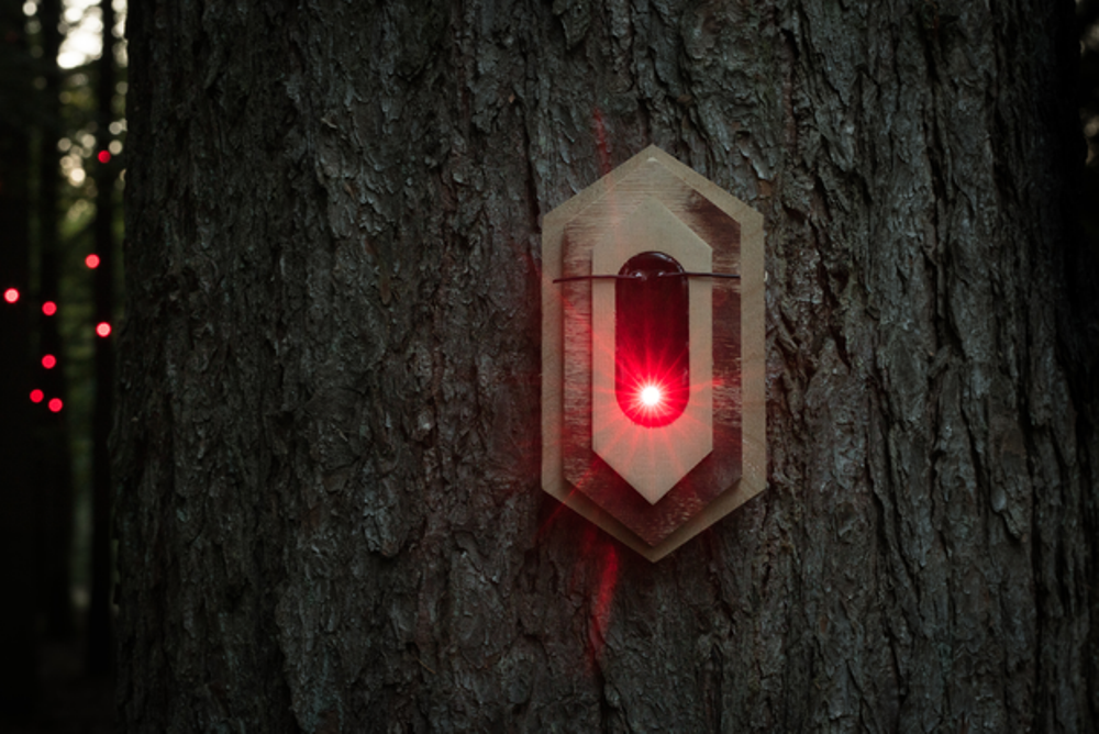 Artist Collective Creates A Digital Organism Of Light In A Dutch Forest