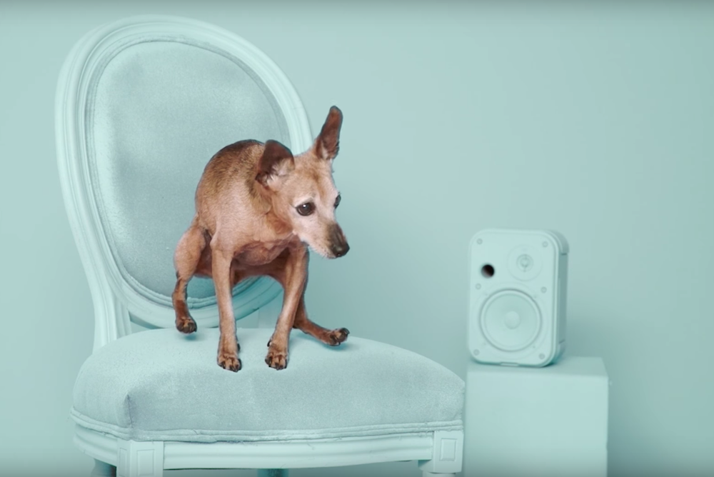Spotify Helps You Adopt A Dog Who Likes The Same Music As You