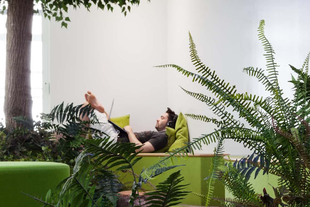 Why Are Offices Turning Into Botanical Spaces?