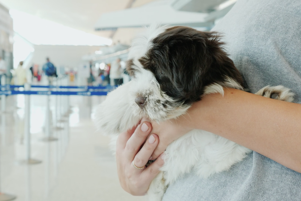 IoT Service Lets Owners Track Pets Traveling As Cargo