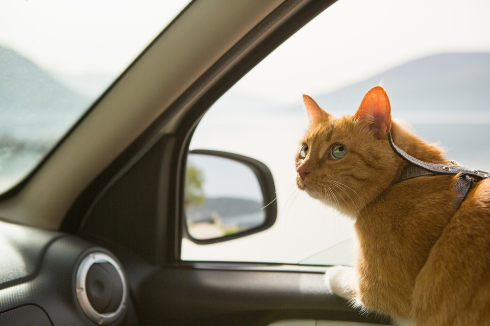 Pet Food Brand Launches Radio Station To Calm Vet-Bound Cats